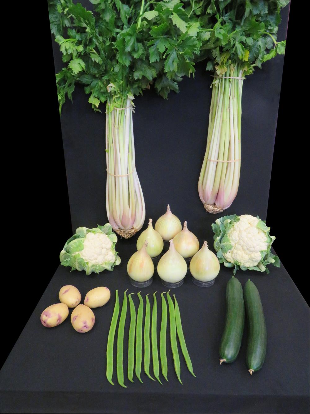 6_veg_tray_2017_web (1)