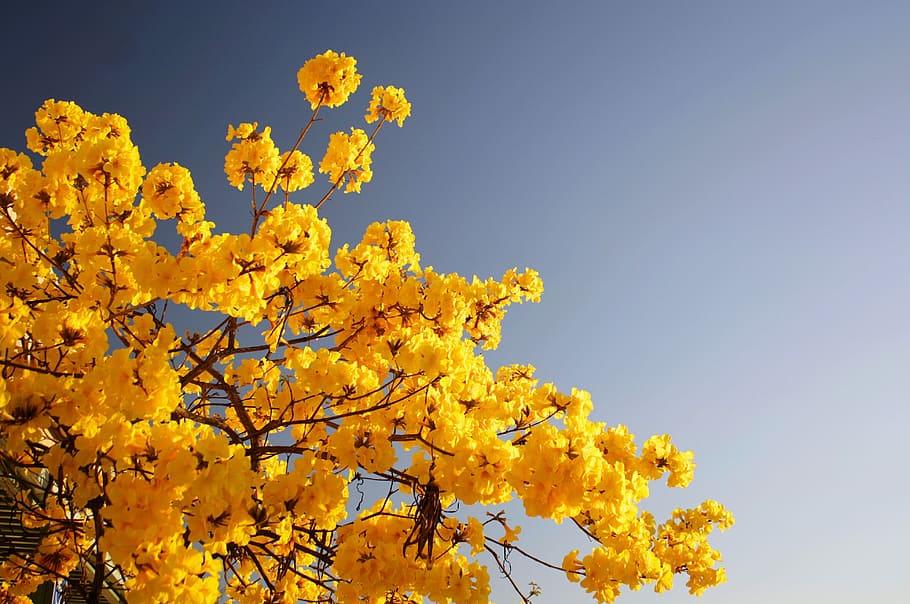 sky-tree-flower-bloom
